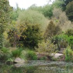 The Tamahere Eventide garden and restored gully -  a place visited by the Hillcrest Garden Club