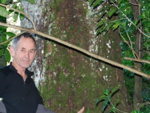Hopes for a restored kahikatea forest in Tamahere are fading, says Leo Koppens