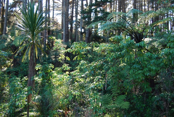 Freed from weeds and rubbish parts of the Tamahere Reserve are flourishing.