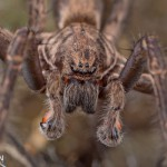 Up close with a spider in the Tamahere Reserve