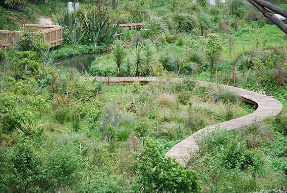 The new boardwalk snaking through the Tamahere Reserve