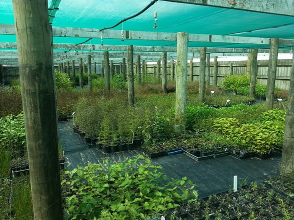 The interior of the Tamahere Community Plant Nursery, 284 Airport Rd.