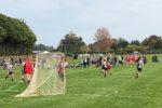 Waikato Lacrosse